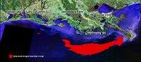 1998 Hypoxia Map
