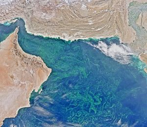 Algal blooms that rob water of oxygen swirl across the Arabian Sea in 2015. New research indicates the sea has the world's largest low-oxygen 'dead zone.' Photo Credit: NASA
