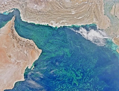World's largest 'dead zone' discovered, and it's not in the Gulf of Mexico