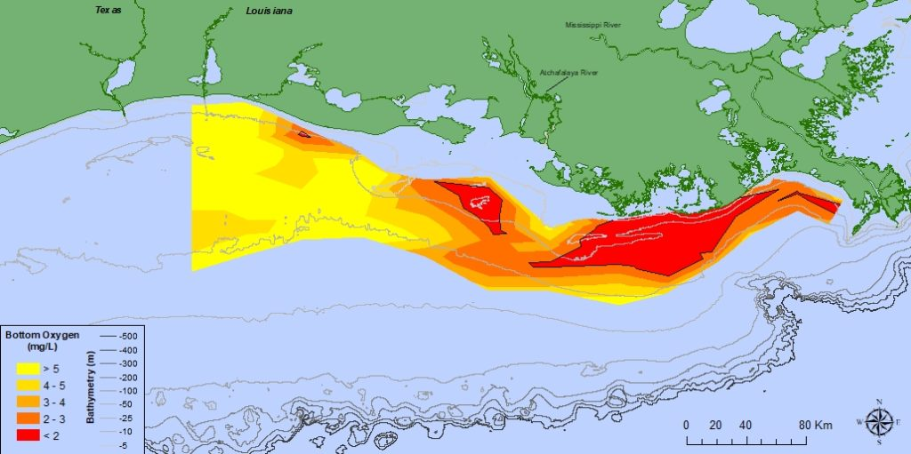 Gulf Hypoxia – In the Northern Gulf of Mexico