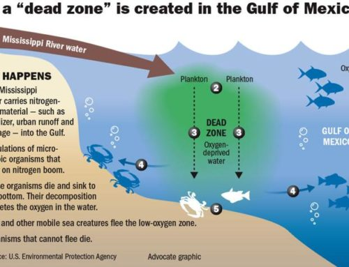 Gulf of Mexico 'Dead Zone' expected to be larger than Connecticut this summer, scientists say
