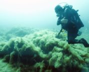 A diver observes filamentous algae, locally known as thanatos, at La Ciotat in the Mediterranean sea, on July 4, 2015. Recent global warming has caused a major algal bloom on the seabed, suffocating flora and causing important biodiversity changes. Boris Horvat / AFP / Getty Images