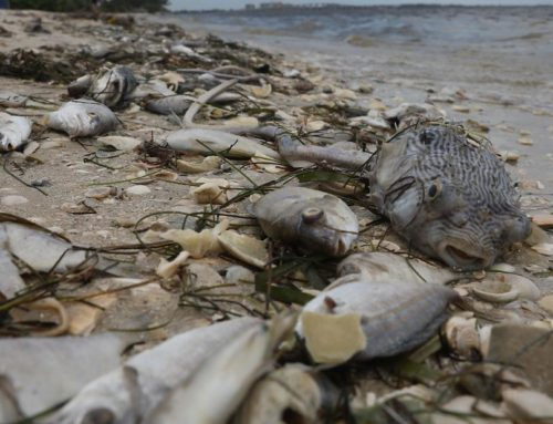 Scientists search for 'smoking gun' in the dead zone of Florida's red tide